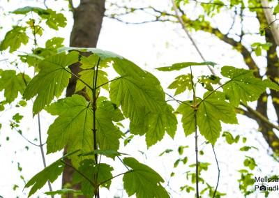 Das Grün der Natur